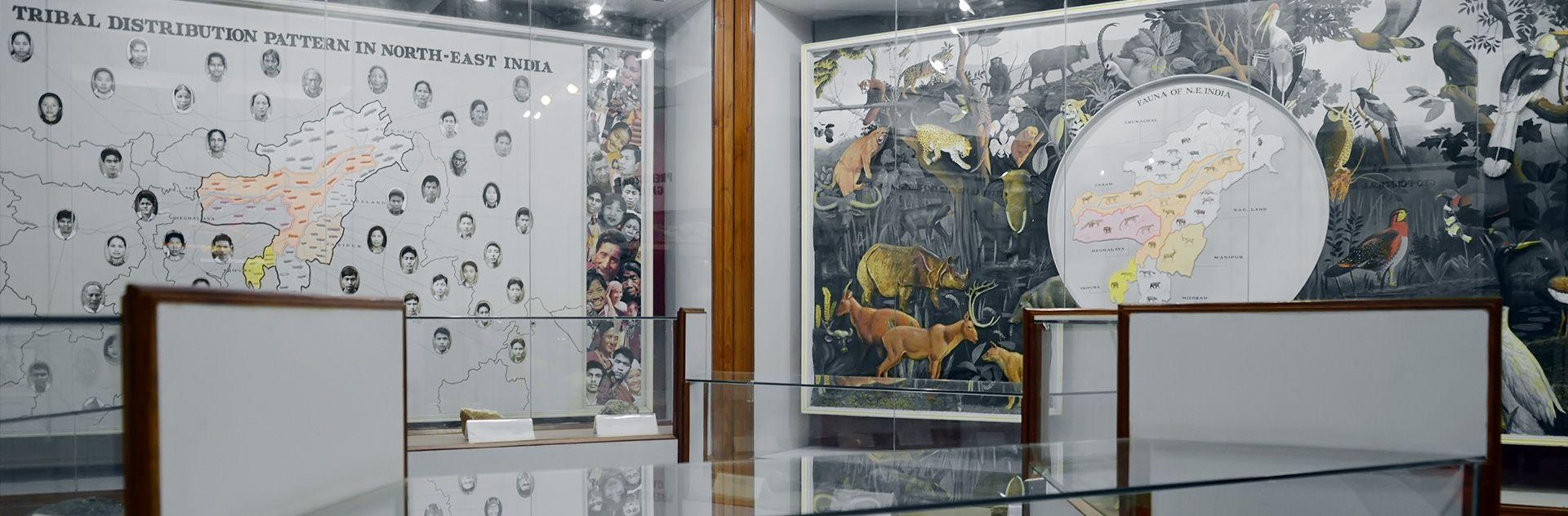 museum in meghalaya